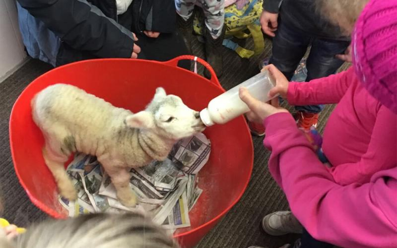 Children feeding lamb
